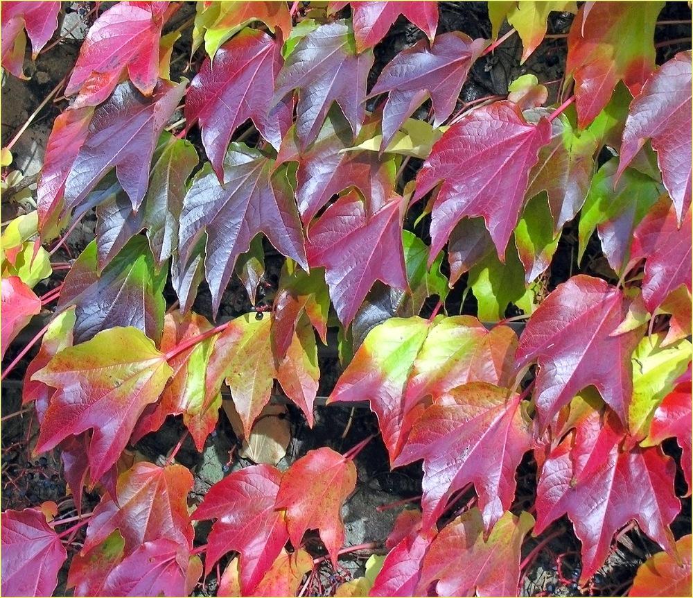 Die Farbpalette des Herbstes