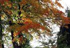 Die Farbpalette eines Ahornbaumes