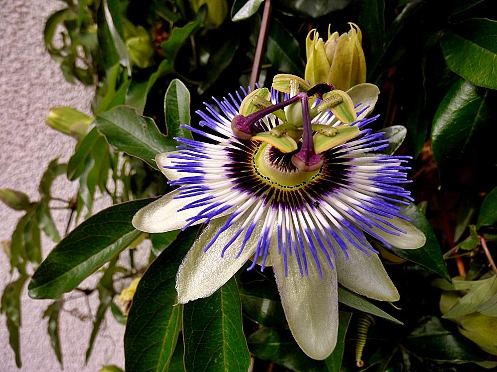 Die faszinierenden Blüten . . .