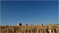 die Felder sind geerntet...