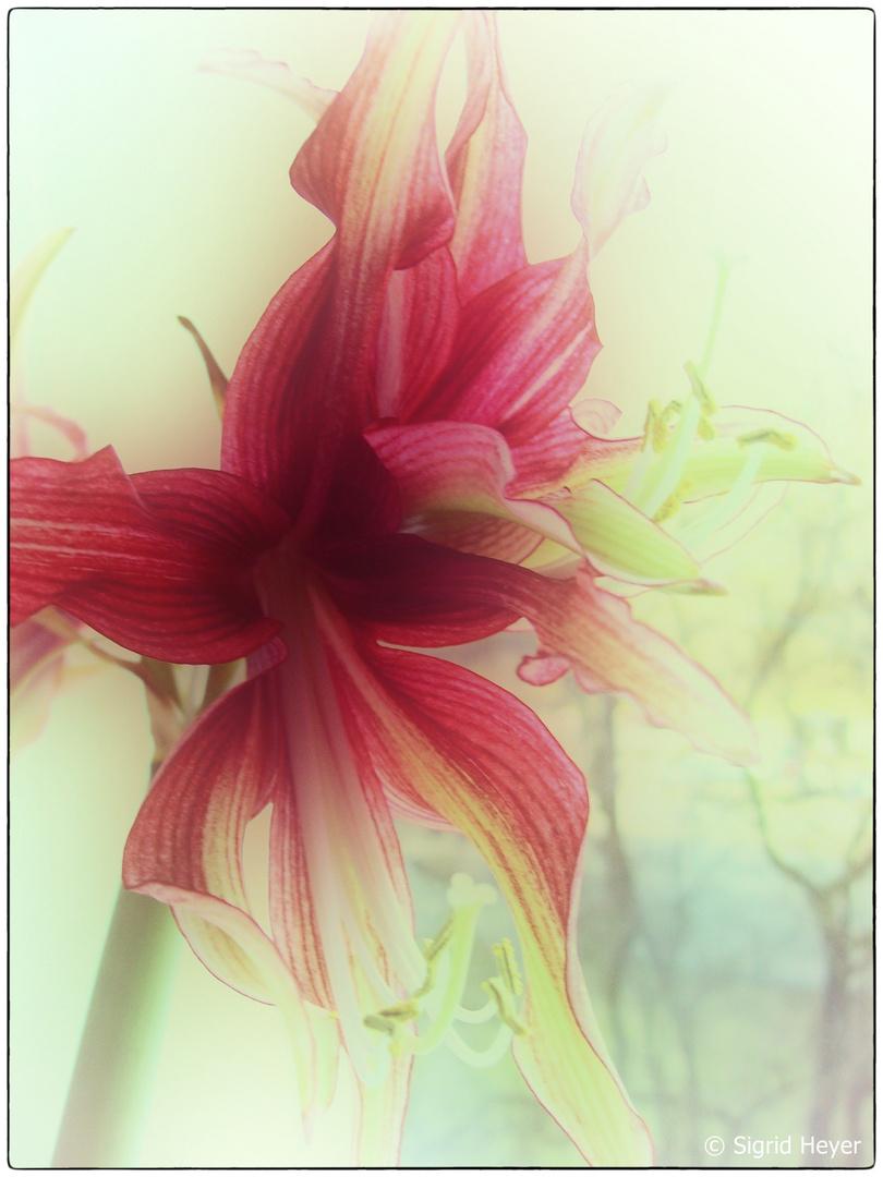 Die filigrane Schönheit