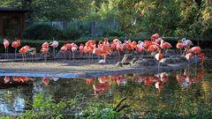Die Flamingos alle auf dem Bild was von manchen Standorten schwierig ist