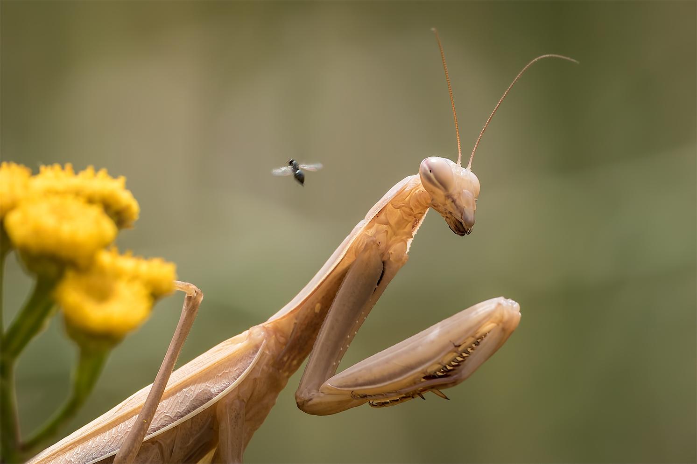 Die Fliege  ....