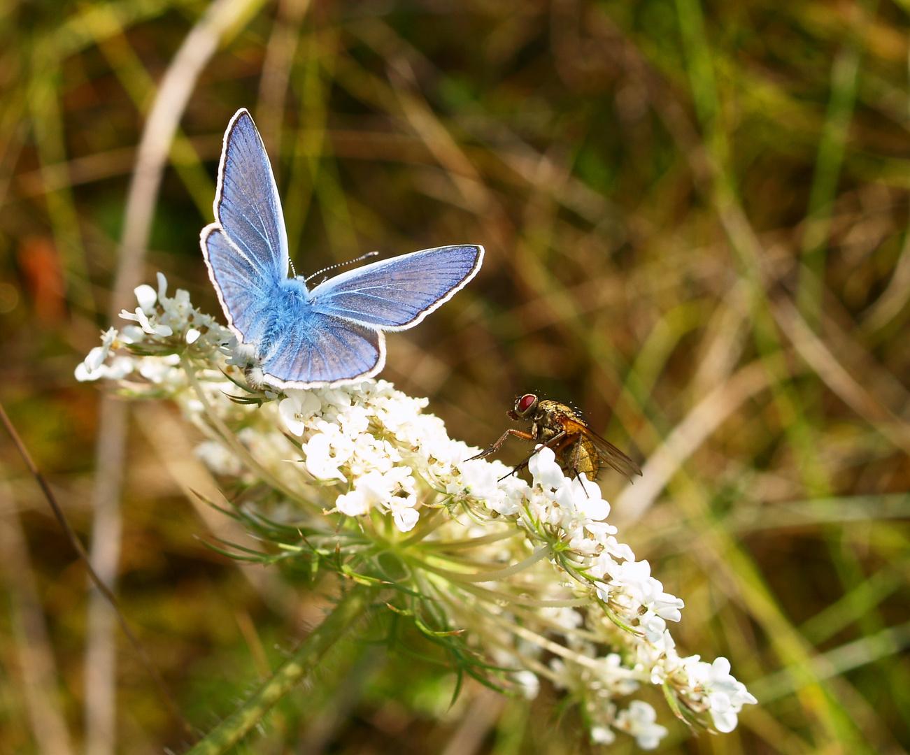 Die Fliege wollte auch mit auf´s Bild