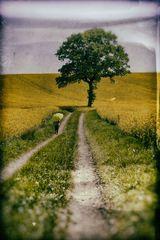 Die Frau mit dem Regenschirm, der Weg in die Bretagne ist noch weit (57)