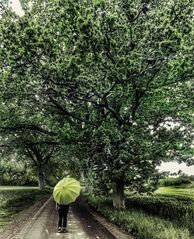 Die Frau mit dem Regenschirm findet einen Baum voller Schuhe.(88)