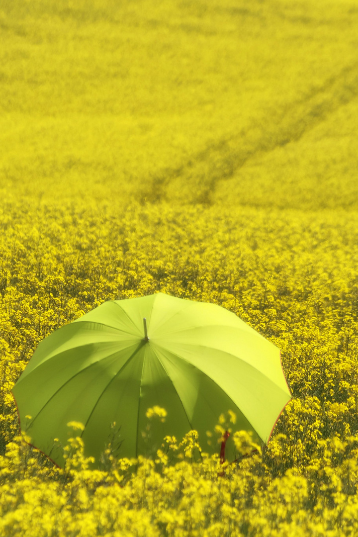 Die Frau mit dem Regenschirm hat sich im Rapsfeld verlaufen  (43)