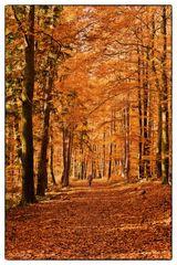Die Frau und der Wald