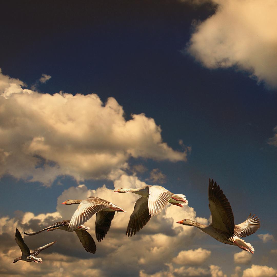 Die Freiheit der fliegenden