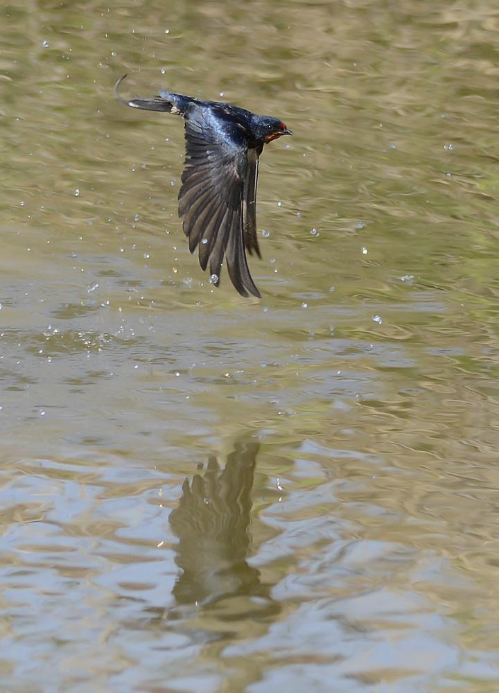 Die Freude am Fliegen