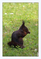 Die Frisur sitzt, das Eichhörnchen auch