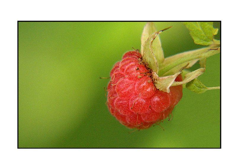 Die Frucht,....