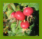 Die Früchte des Herbstes!