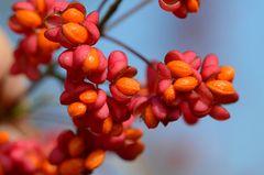 die Früchte des Herbstes...