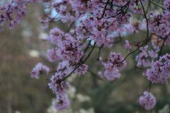Die Fülle des Frühlings