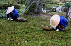 Die Gärtner von Kenroku-en