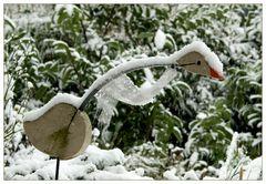 Die Gans im Schnee...