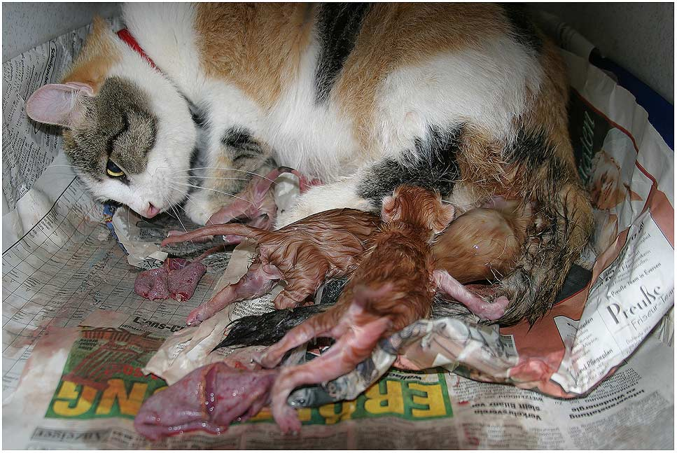 Katze Blutet Nach Geburt