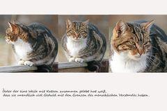 die Geduld der Katzen...