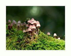 Die geheime Welt der kleinen Pilze