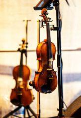 Die Geigen