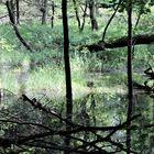 Die Geister des Waldes...