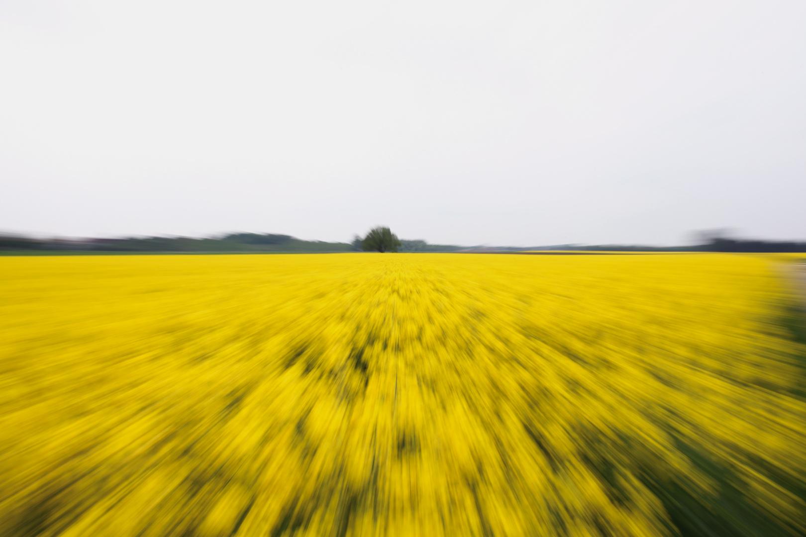 Die gelbe Flut