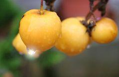 Die gelbe Frucht