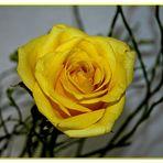 Die gelbe Rose...
