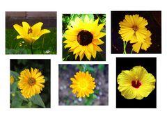 Die Gelben