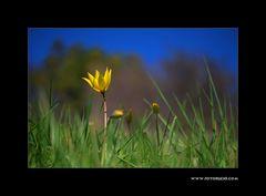 Die gelben Wilden #4