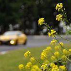 Die Gelbsucht...
