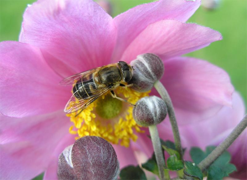 Die Geschichte von den Blümchen und den Bienchen...
