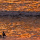 Die goldene Welle
