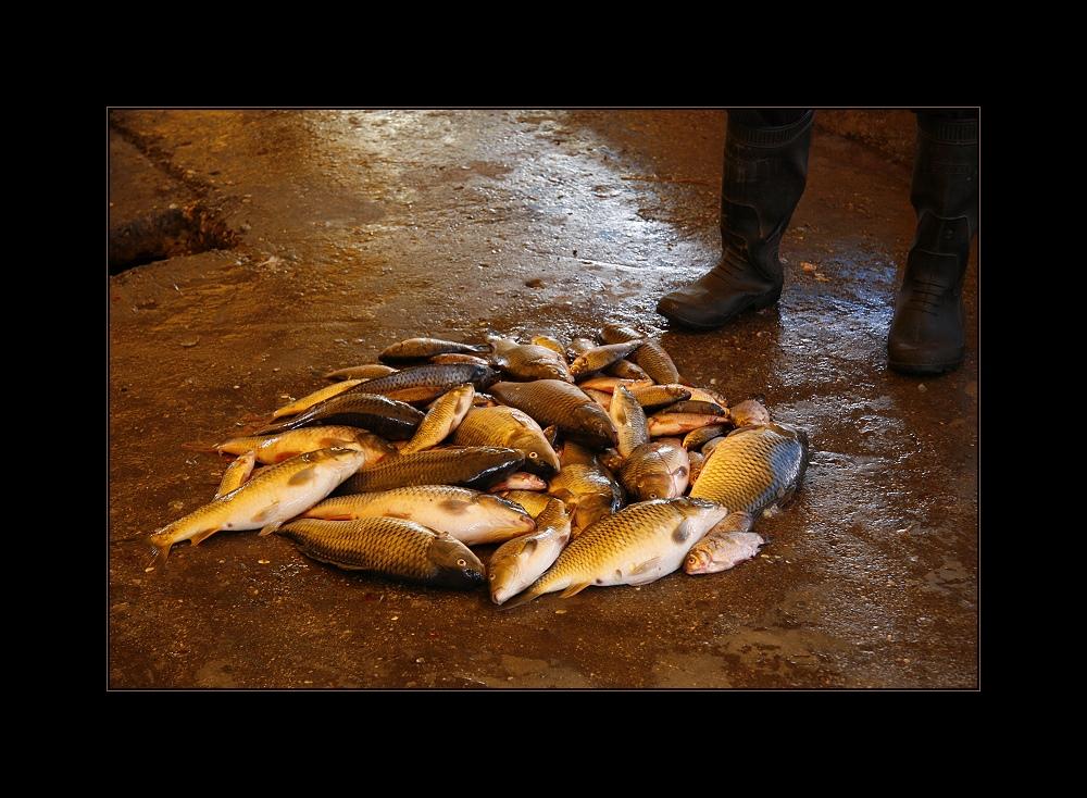 """""""Die goldenen Fische"""""""