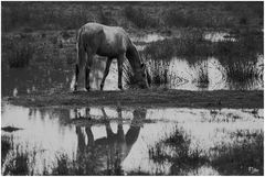 Die große Pferdetränke