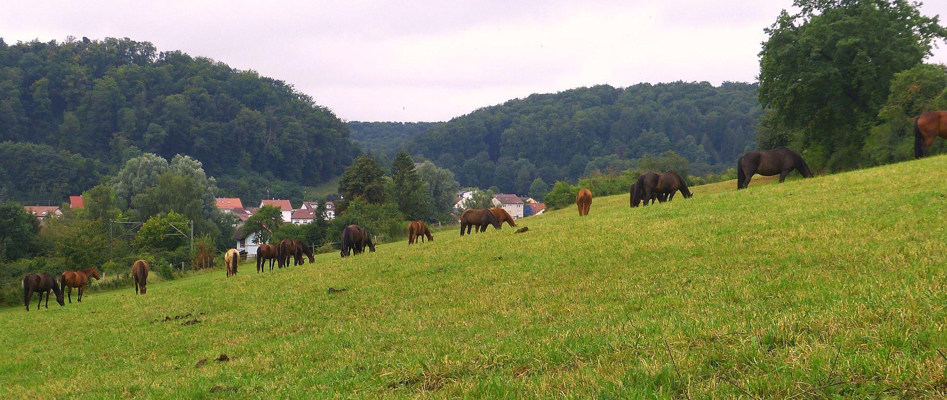 Die große Pferdeweide am Ortsrand von Urspring