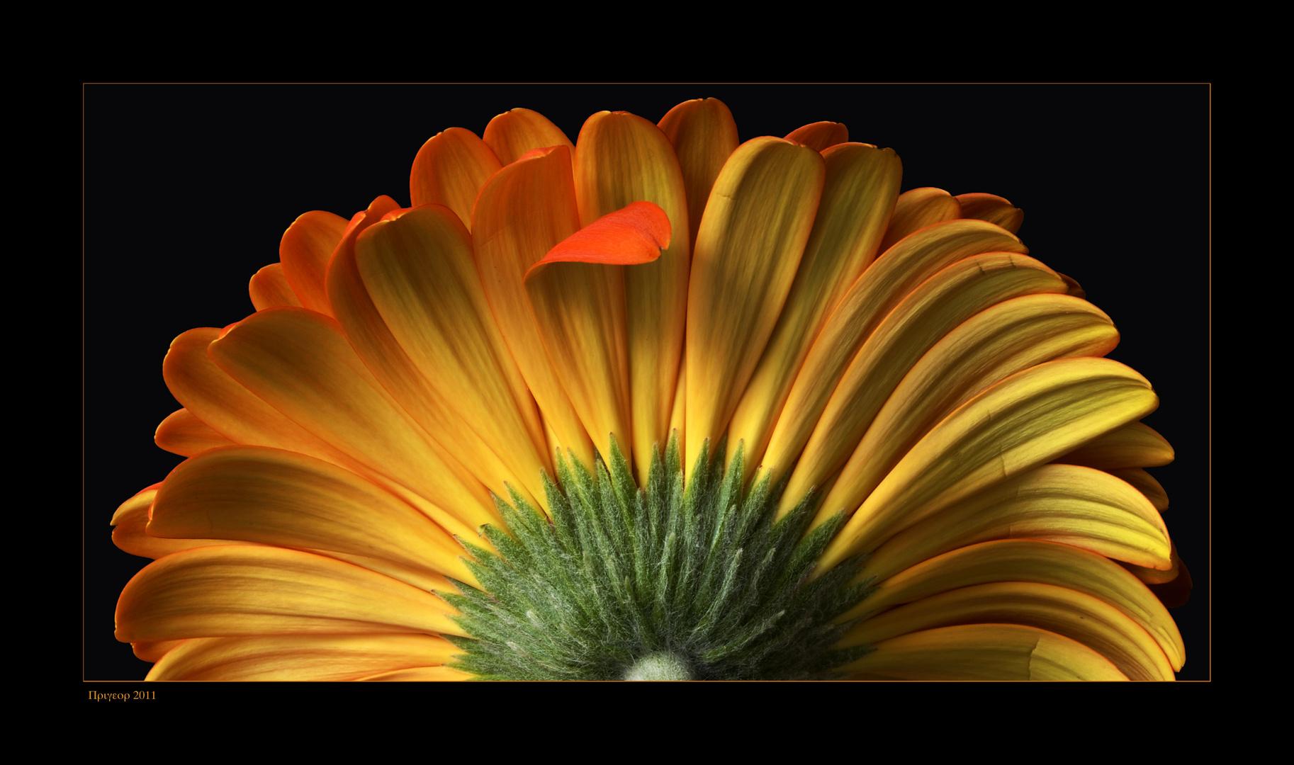 Die halbe Blume .....