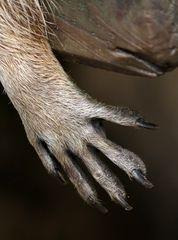 Die Hand...