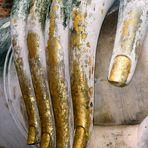 DIE HAND BUDDHAS