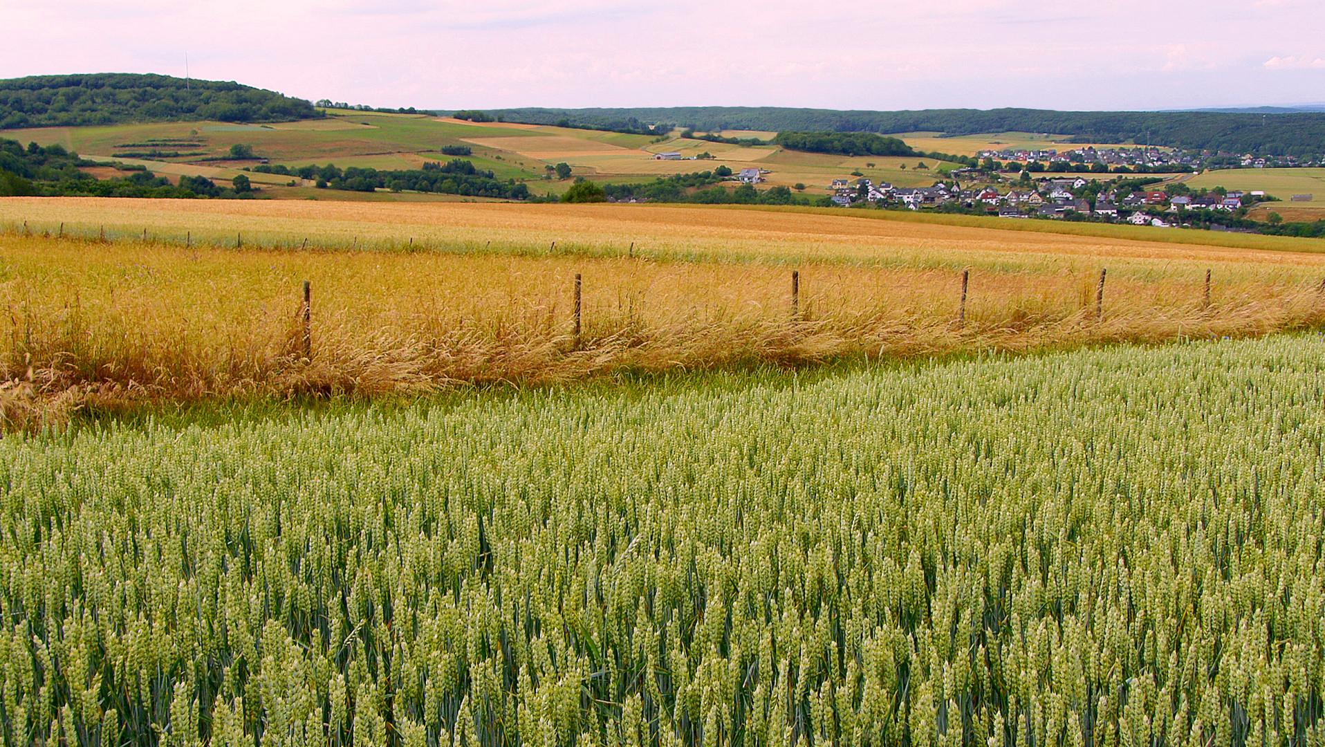 Die harmonischen Farben der Felder, im Sommer 2016!