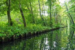 Die Hauptelemente des Spreewalds: Bäume und Wasser