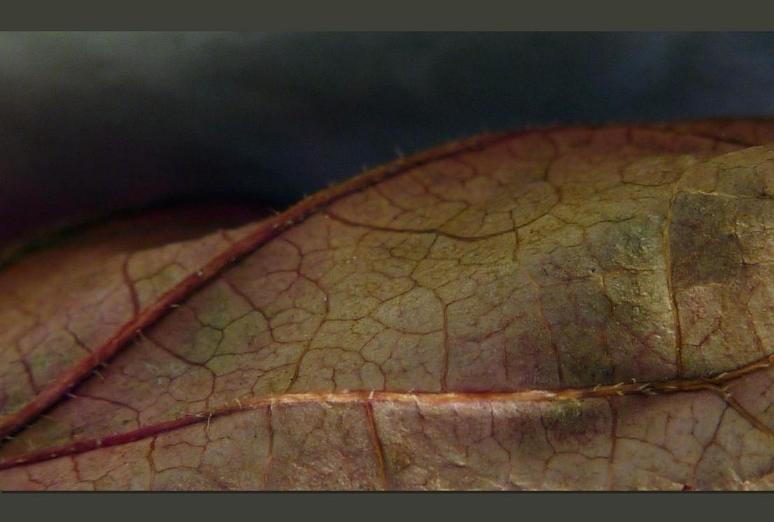 die Haut eines sterbenden Blattes