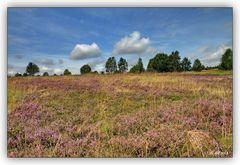 Die Heide blüht...! ;-)