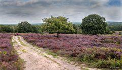 Die Heide blüht...
