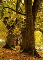 Die Herbstallee