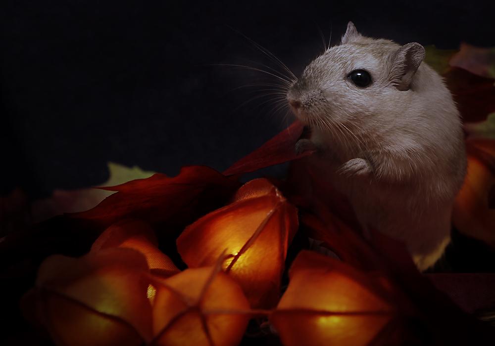 die Herbstmaus...