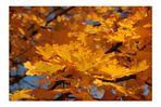 Die HerbstSPITZEN