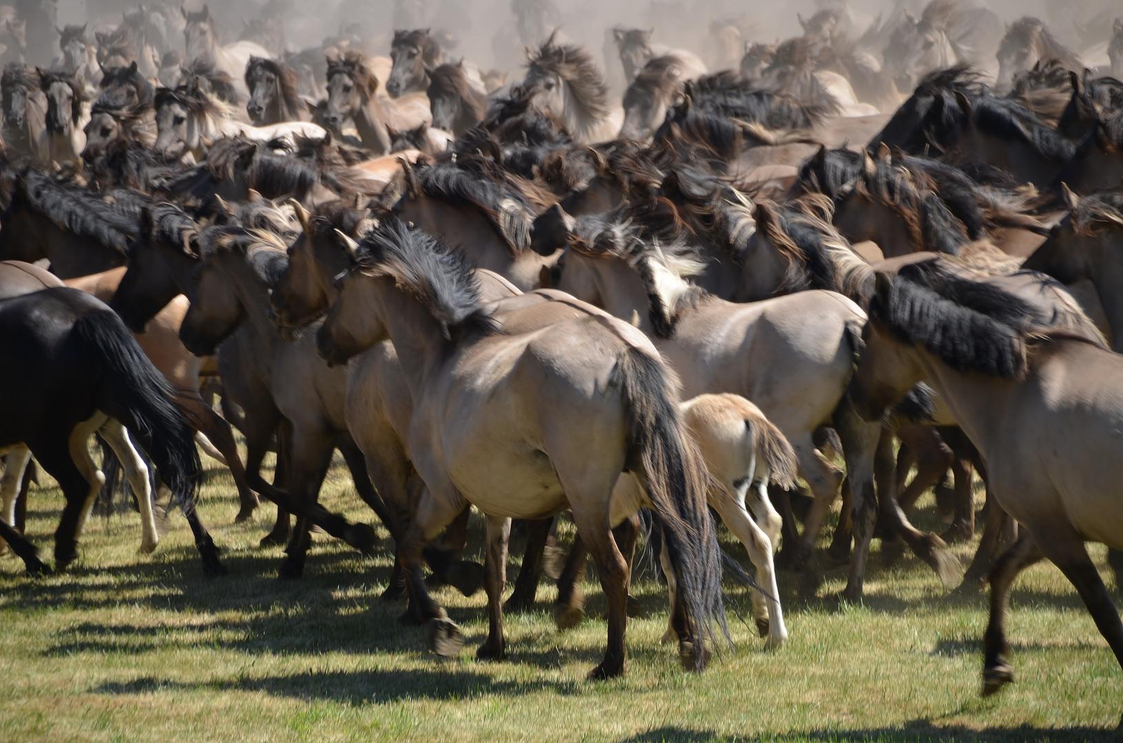 *die Herde*