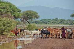 Die Herde ..